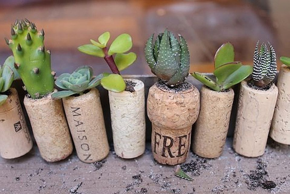 upcycled succulent planters