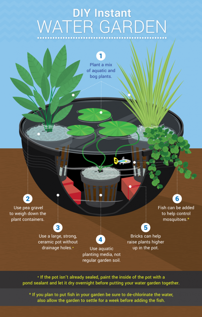 Small Container Water Gardens infographic