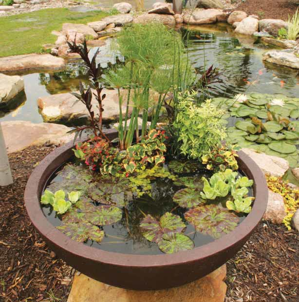 Small Container Water Gardens