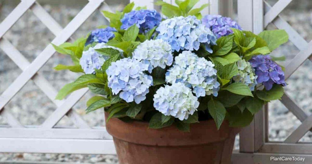 plants that bloom indoors